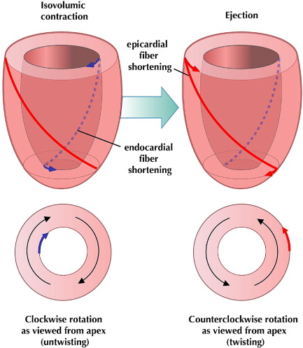 cardiac_biomechanics.jpg