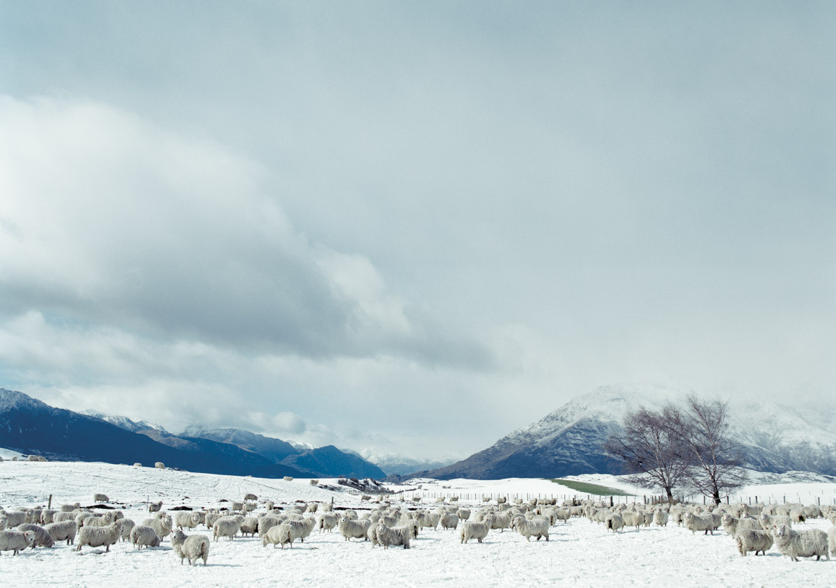 farmland-sheep-near-queenstown-new zealand-spid pye.jpg