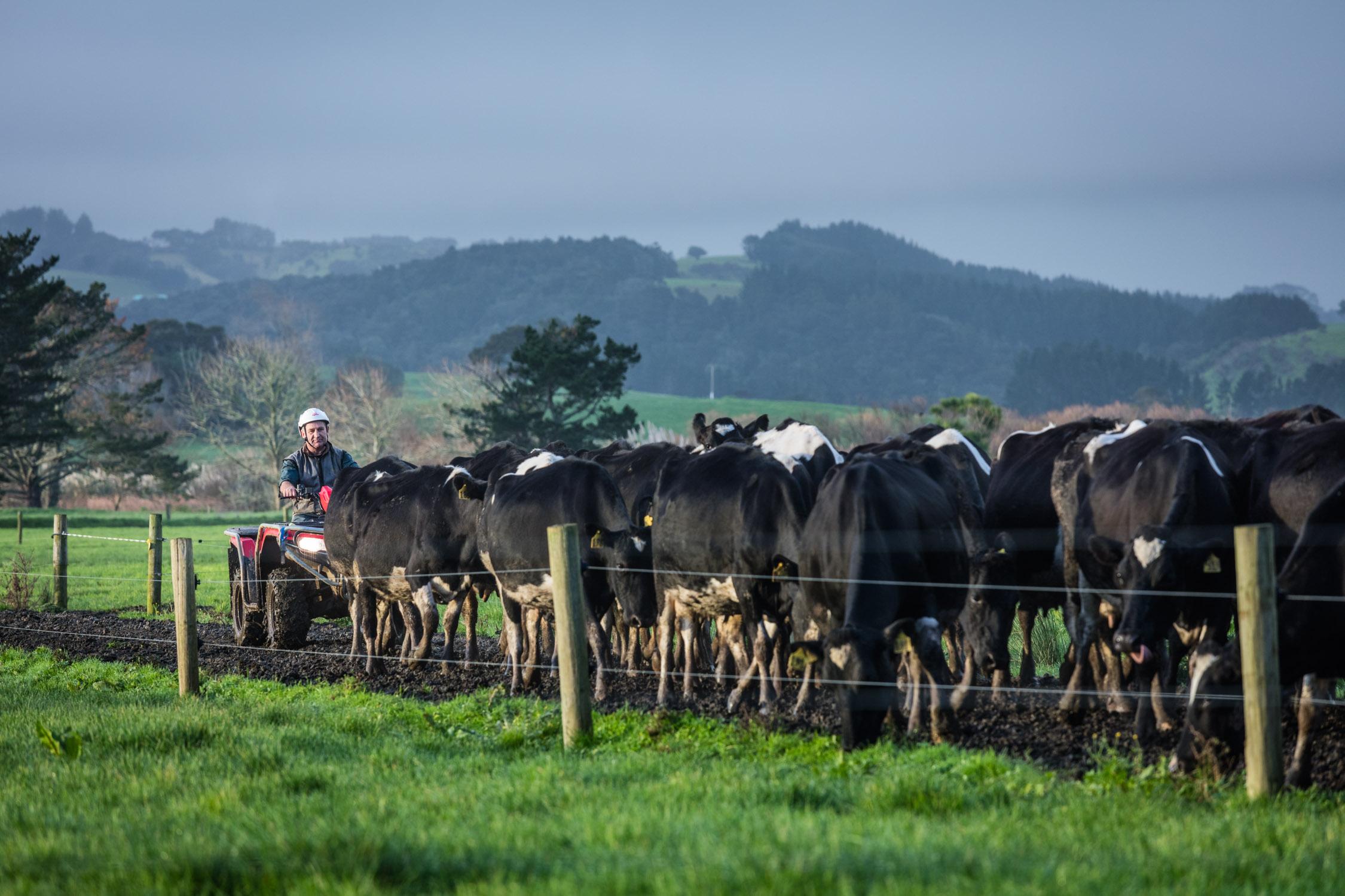 Farmer-Helensville-New Zealand-977_0E2A7705_0154-Edit.jpg