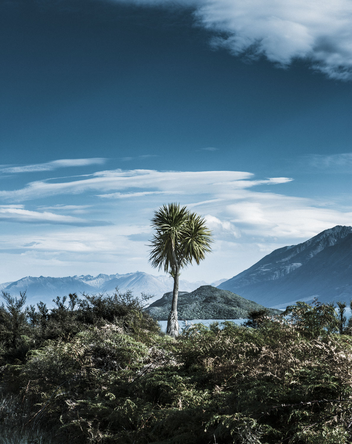 Cabbage Tree by Spid