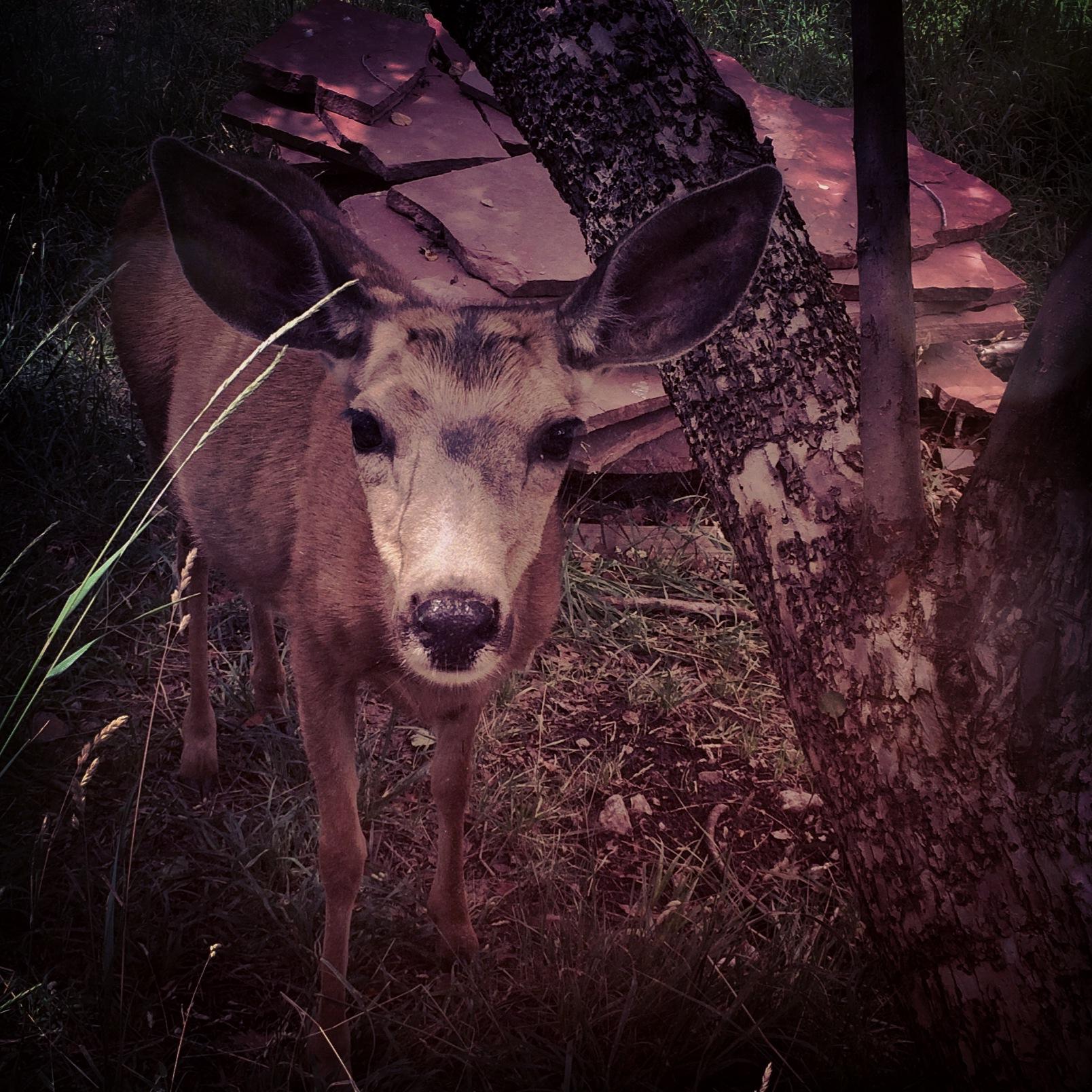 Deer Medicine.JPG