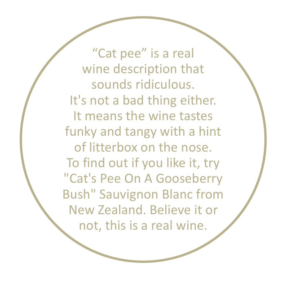 why-does-wine-smell-like-cat-pee.jpeg