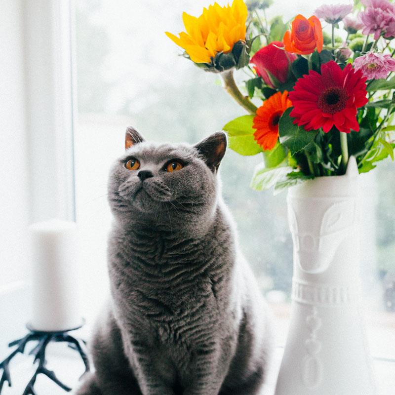 INTERNATIONAL CAT DAY -