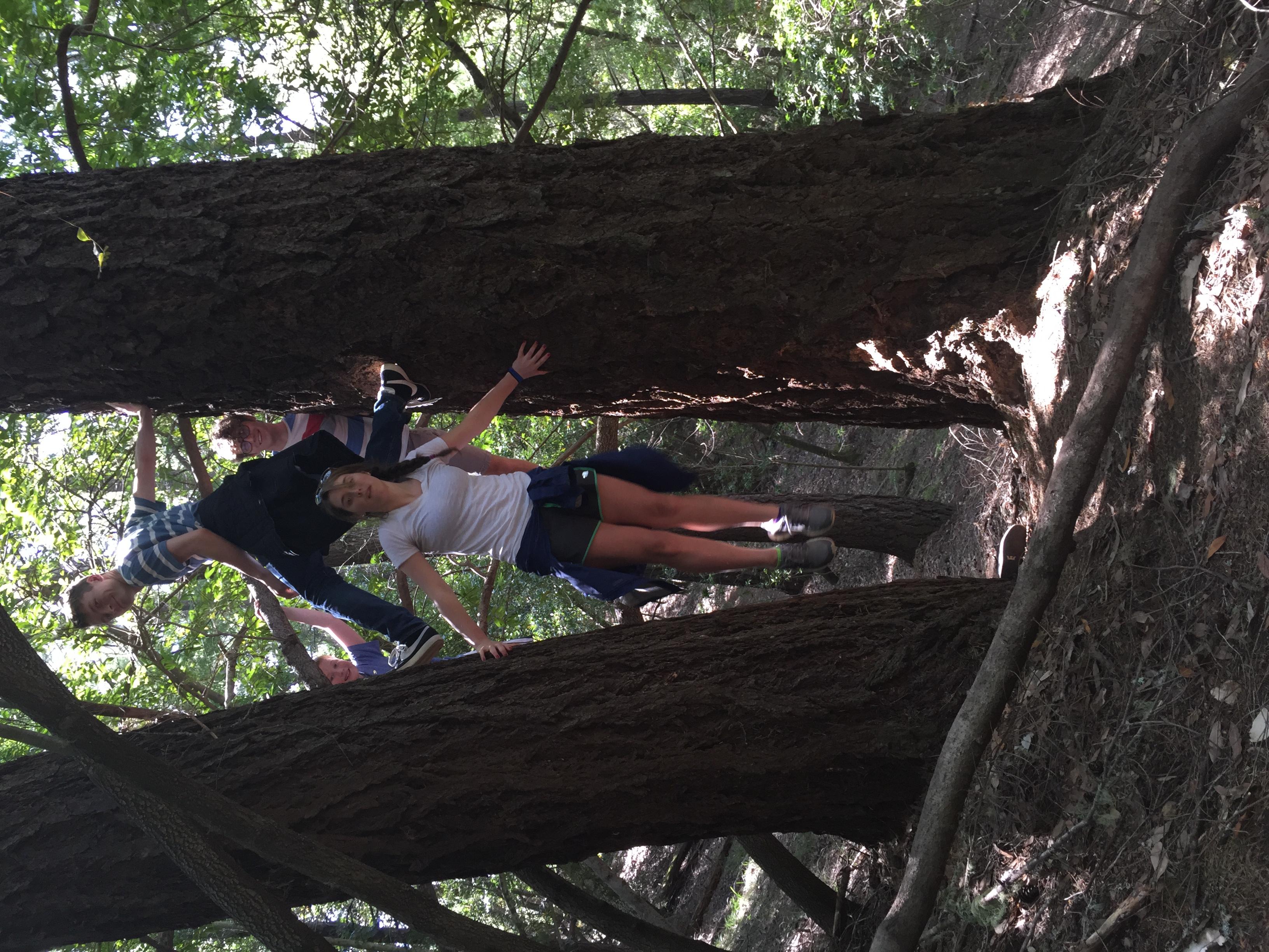Climbing in the Redwoods.JPG
