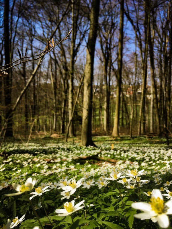 Frühlingswald.JPG