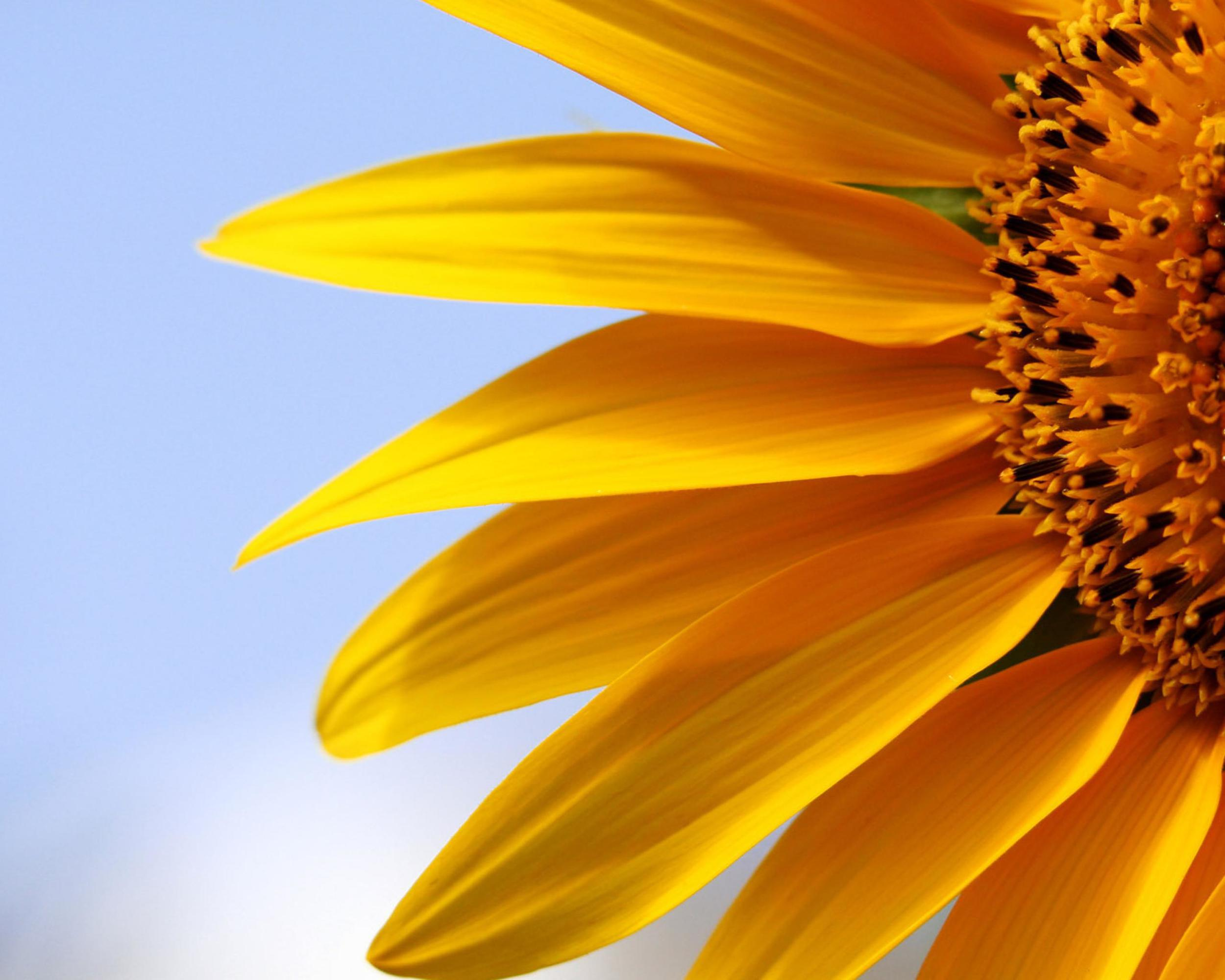 nature-images-flower-sunflower-free-hd-270949.jpg
