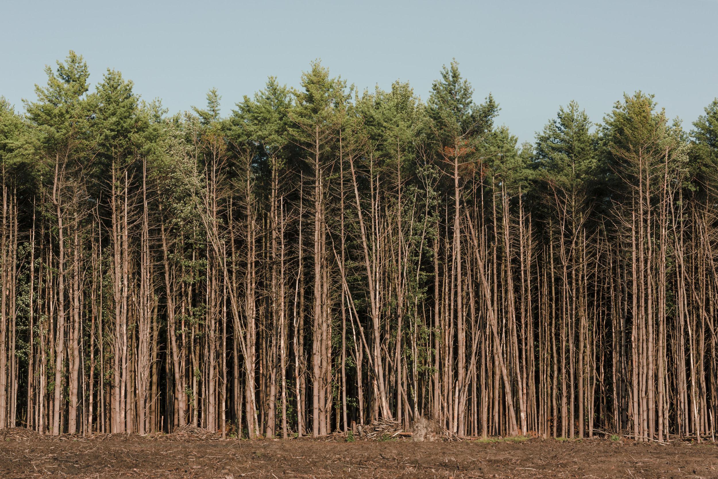 tree-cutting-cp-2019-web-23.jpg
