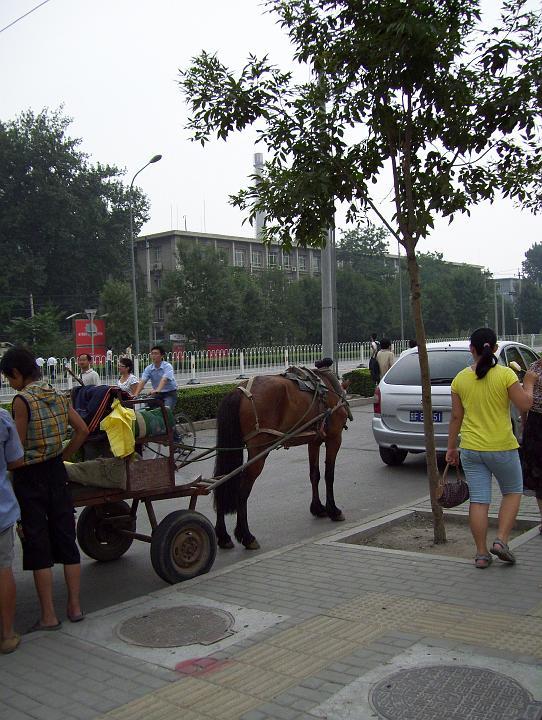 O'Keefe-Horses, Carts & Cars