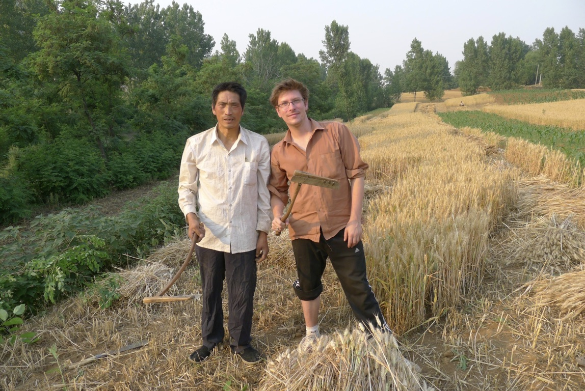Dr. Thomson harvesting wheat with one of his coworkers from the construction site
