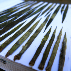 spines250.jpg