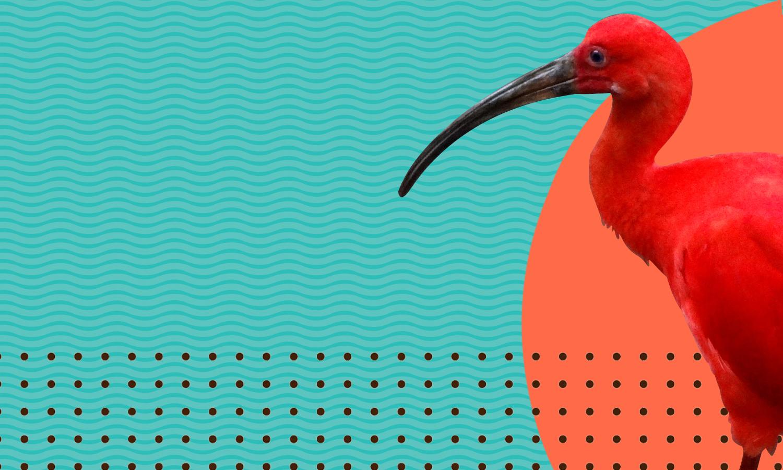 bird background.jpg