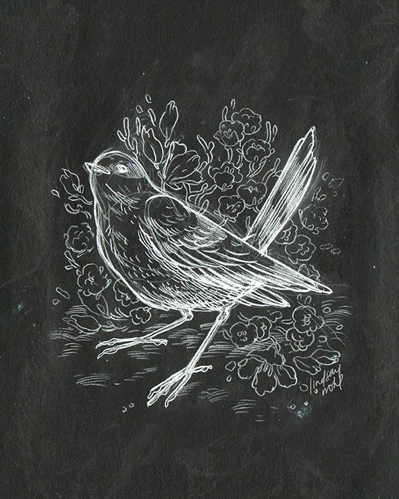 BirdSketch_LindsayNohl_chalk_72.jpg