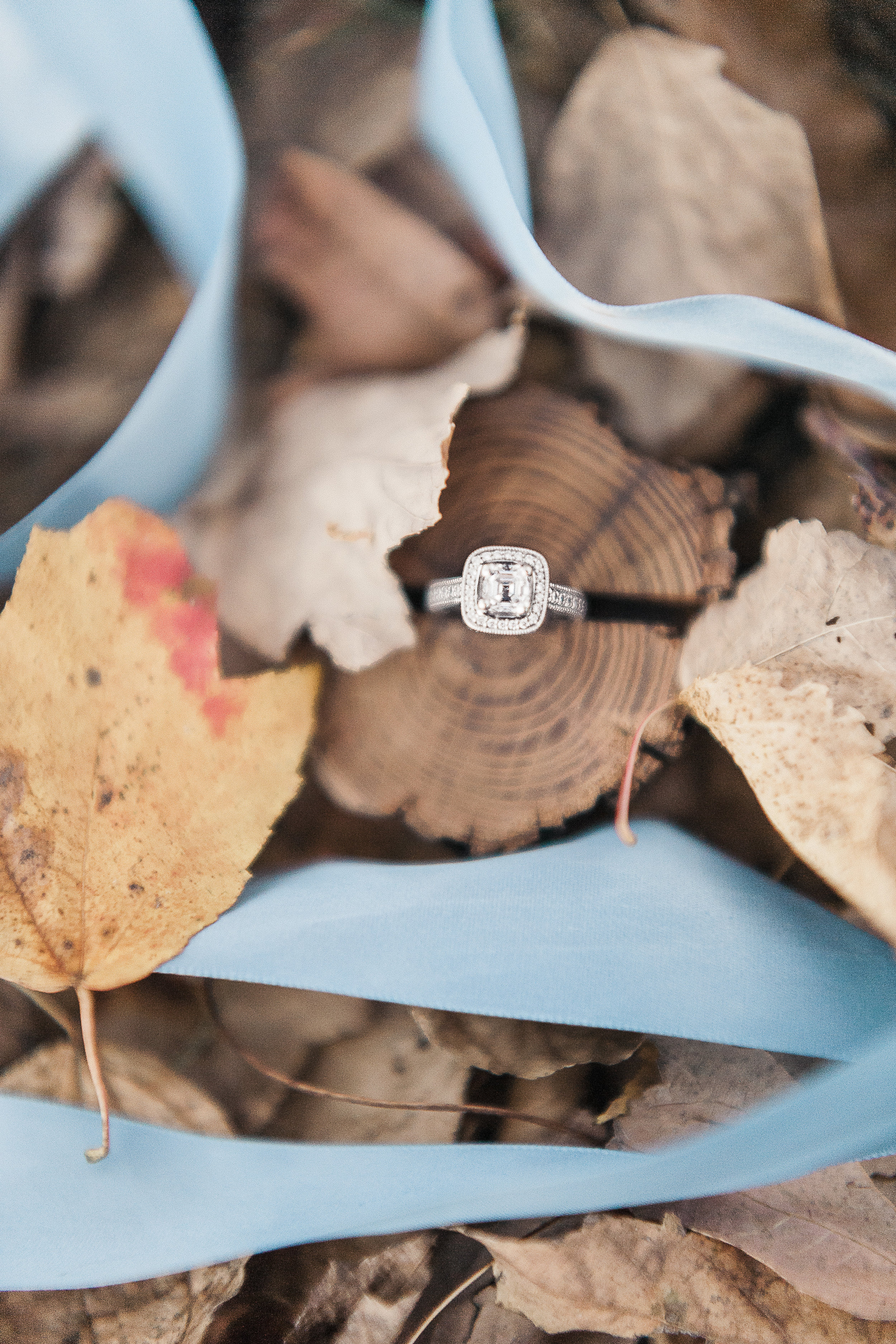 Engagements_139.jpg