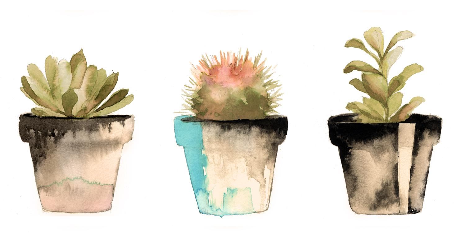 Succulents Blue story