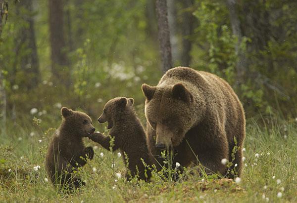 Absaroka-Beartooth Wilderness (920,000 acres)