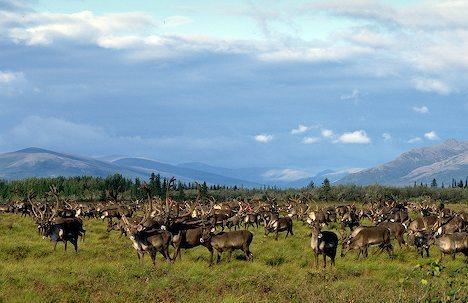 Arctic National Wildlife Refuge: Rethinking Ecological Crisis