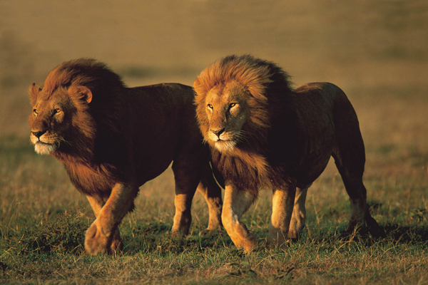Serengeti: Encountering an Ancient World of Life