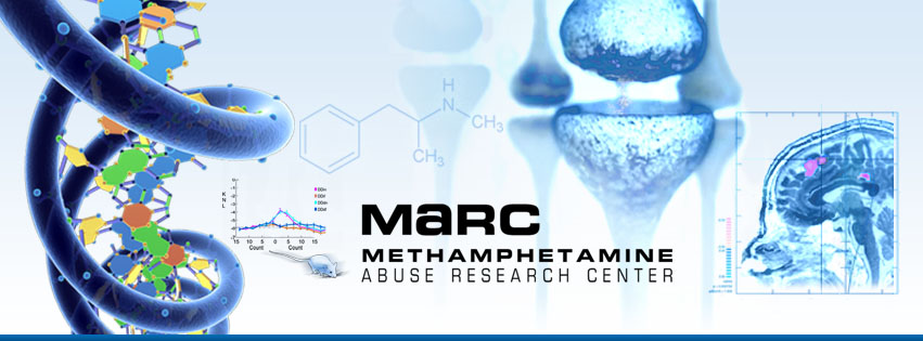 Methamphetamine Abuse Research Center (MaRC) Graphic Identity