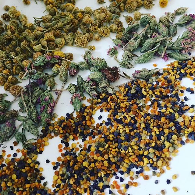 Summer gelato journey, bright, mellow, creamy and a little unexpected base. An ode to the Cotswolds herb garden: Wildflower and lavender bee pollen, flowering young thyme and chamomile infused into pumpkin seed gelato sweetened with raw honey. The bee's knees. #cheflife #cotswoldschef #medicinalherbs #plantbasedgelato #vegetarian #healthyish #beauty #instagood #londonchef #recipedeveloper