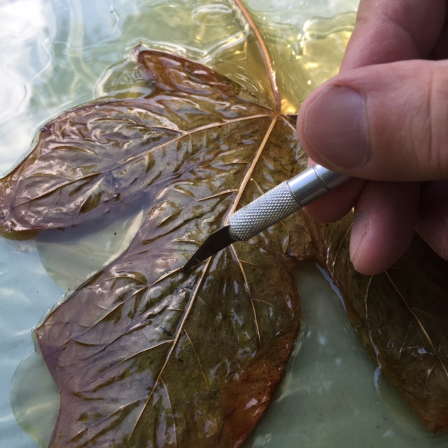 Leaf surgery - careful not to scratch the plexi below!