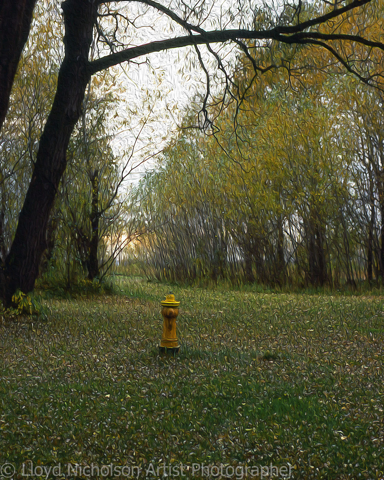 The Lonely Fire Hydrant