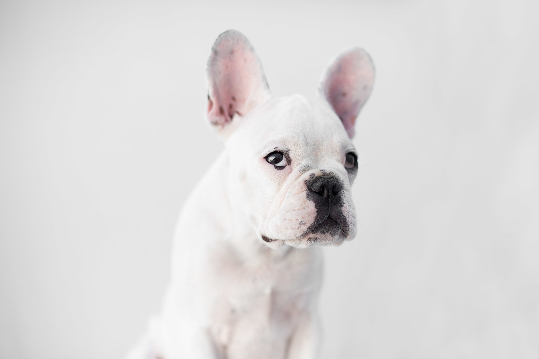 Los-angeles-best-modern-dog-pet-photographer--34.jpg