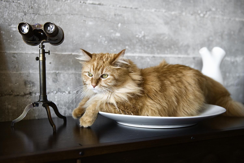 cat-photographer-in-los-angeles.jpg