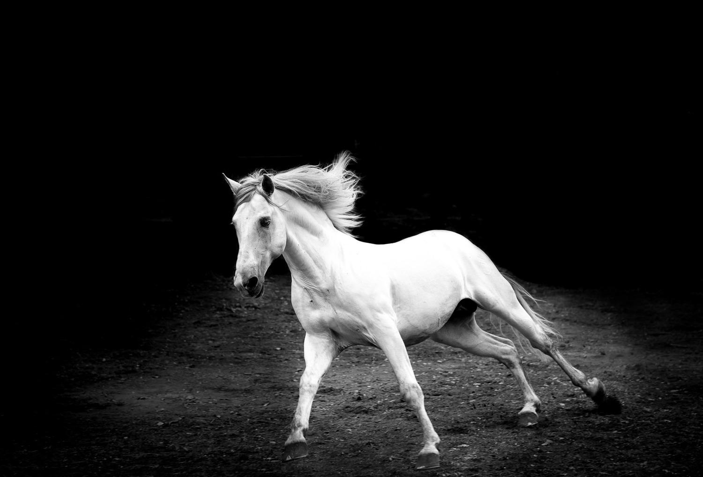 equine-photographer-los-angeles.jpg