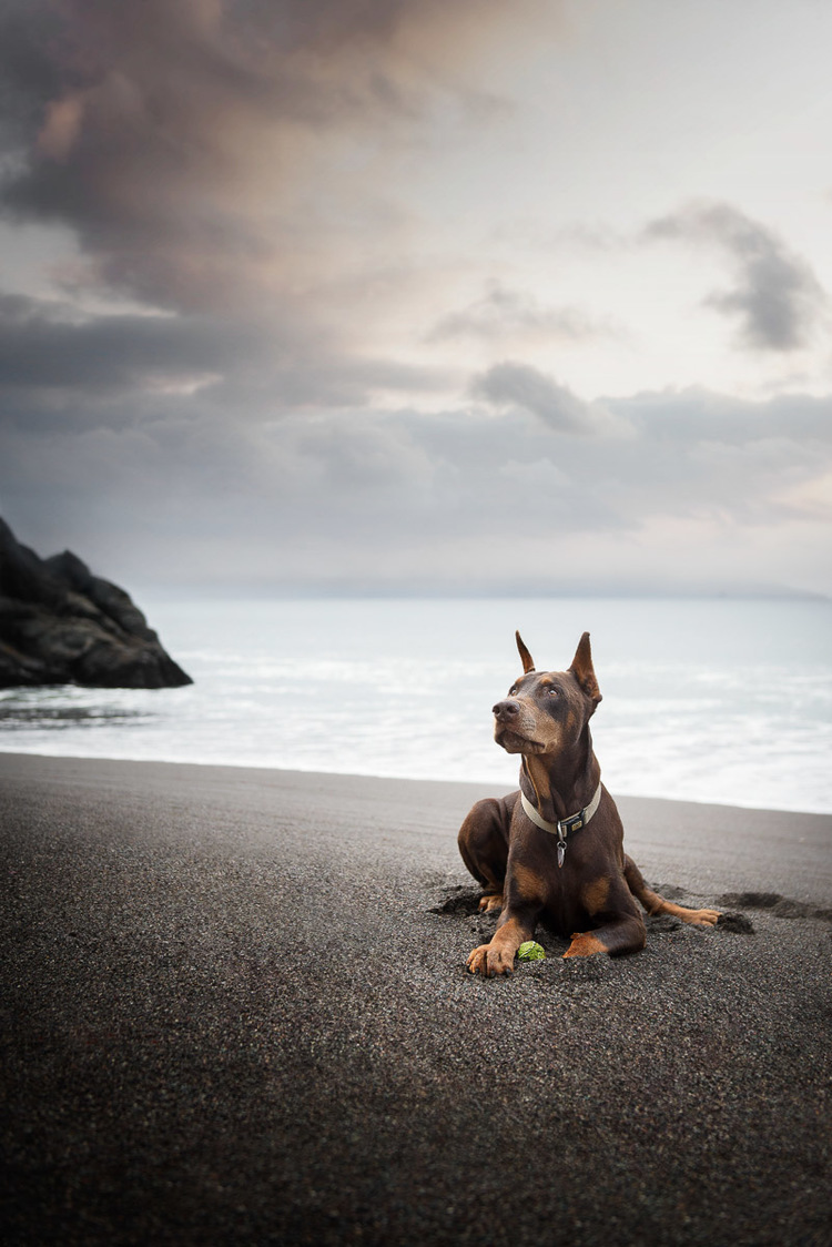 lifestyle-dog-photography-for-pet-brands-los-angeles-san-francisco-9.jpg