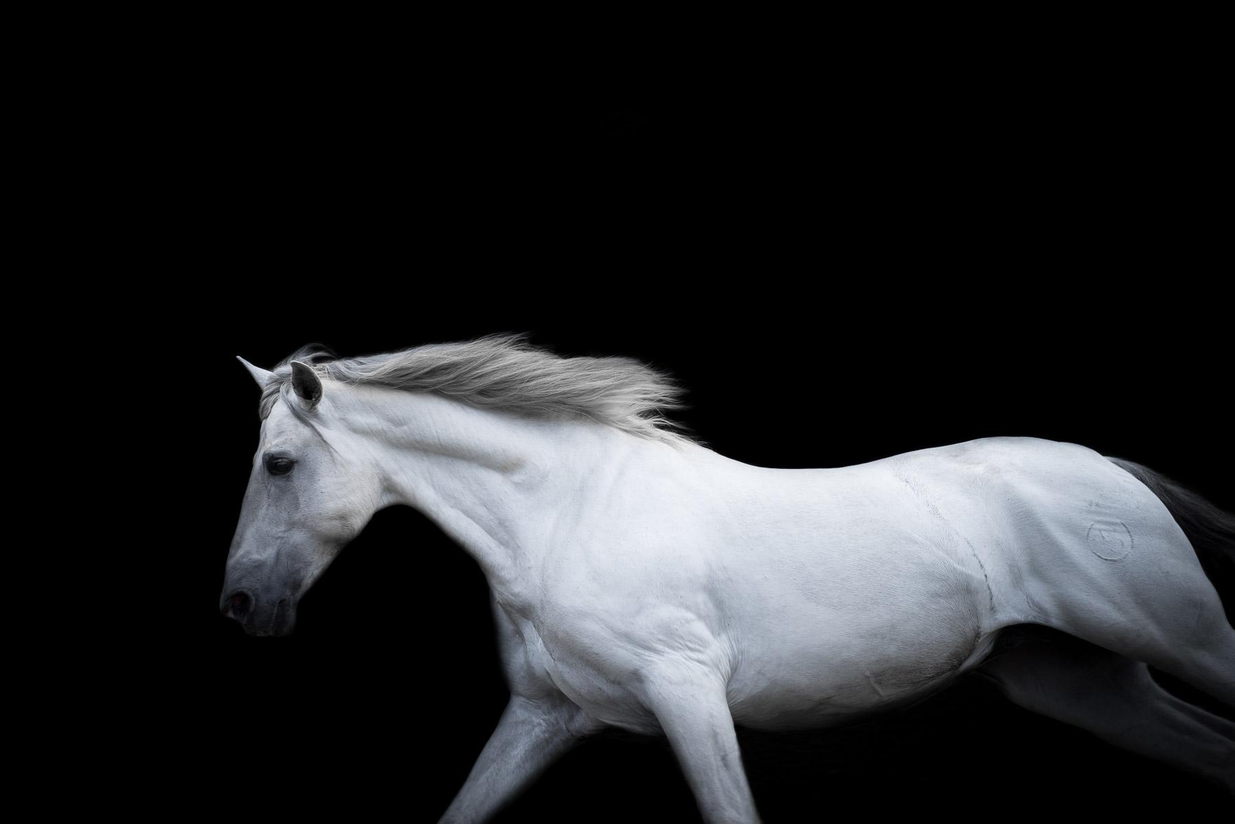 AliciaRiusPhotography-1.jpg