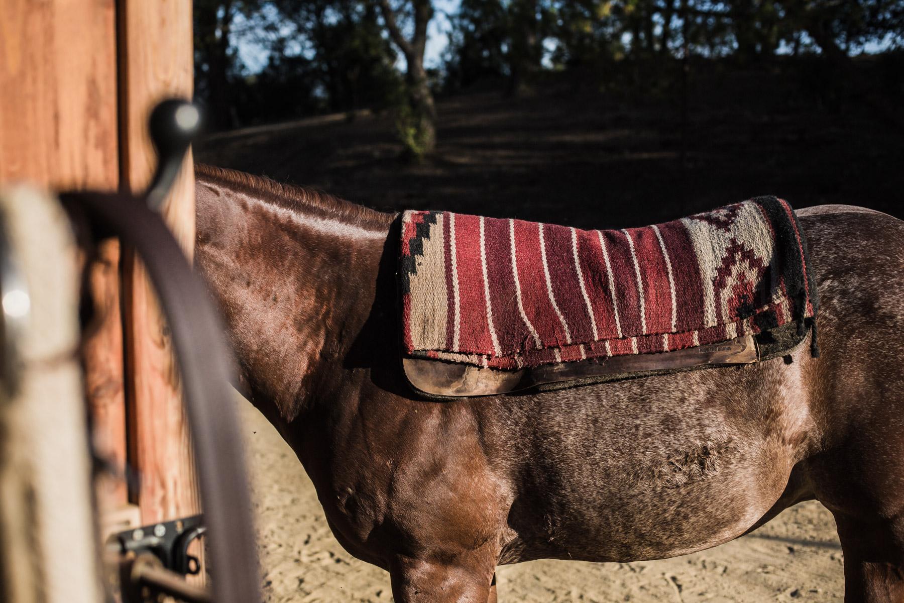 Ojai-horsmanship-equine-school-photography-55.jpg