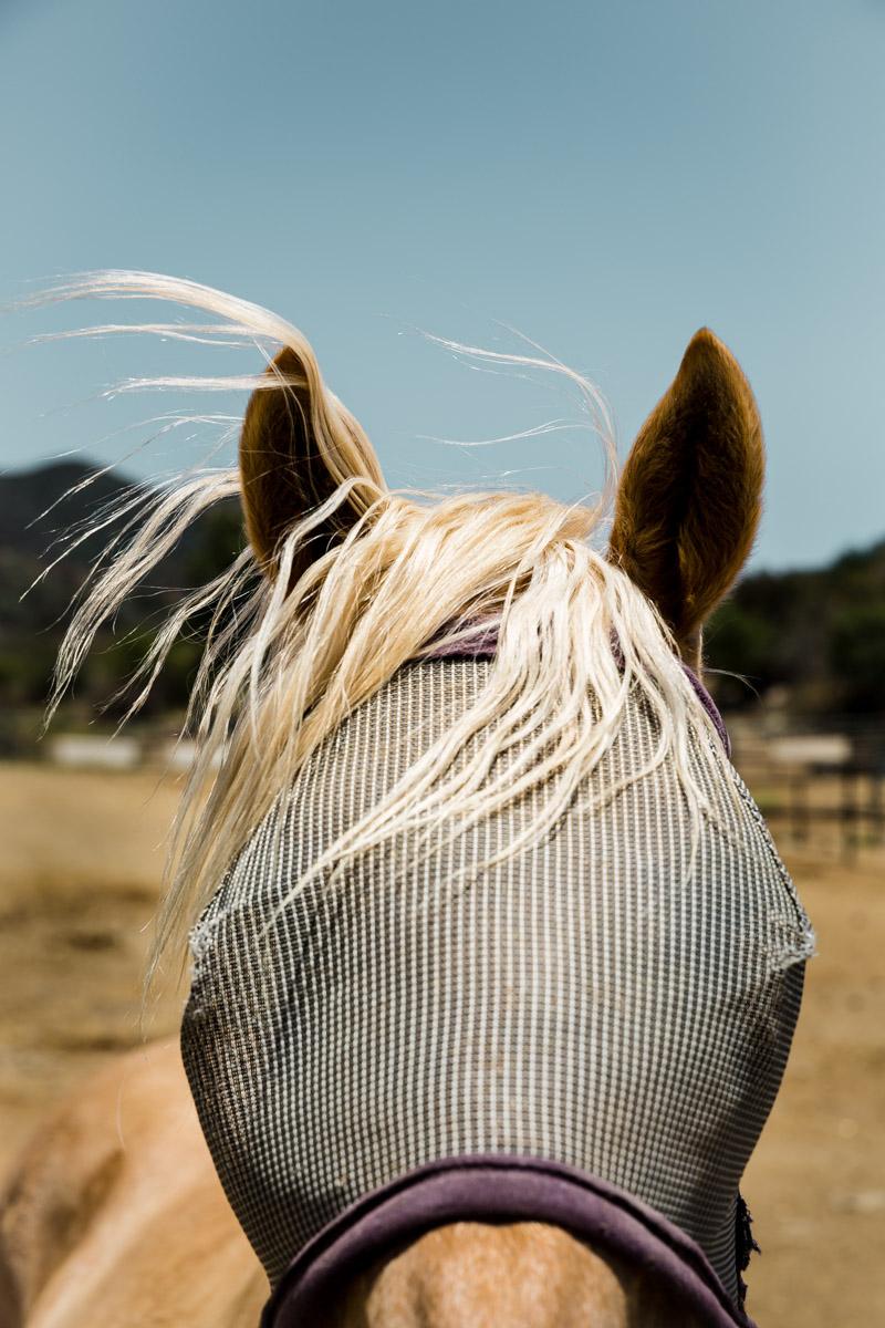 Ojai-horsmanship-equine-school-photography-13.jpg