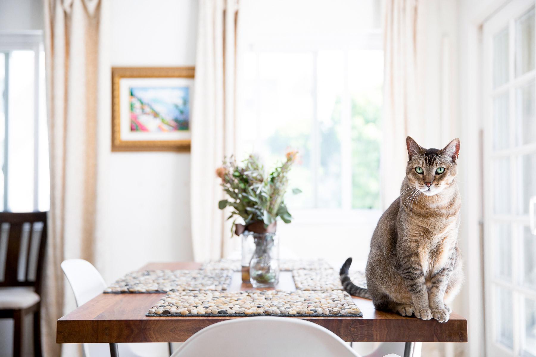lifestyle-cat-photographer.jpg
