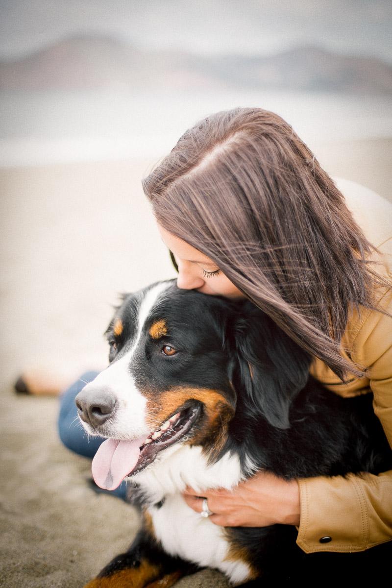 swiss-bernese-dog-photography-with-human.jpg