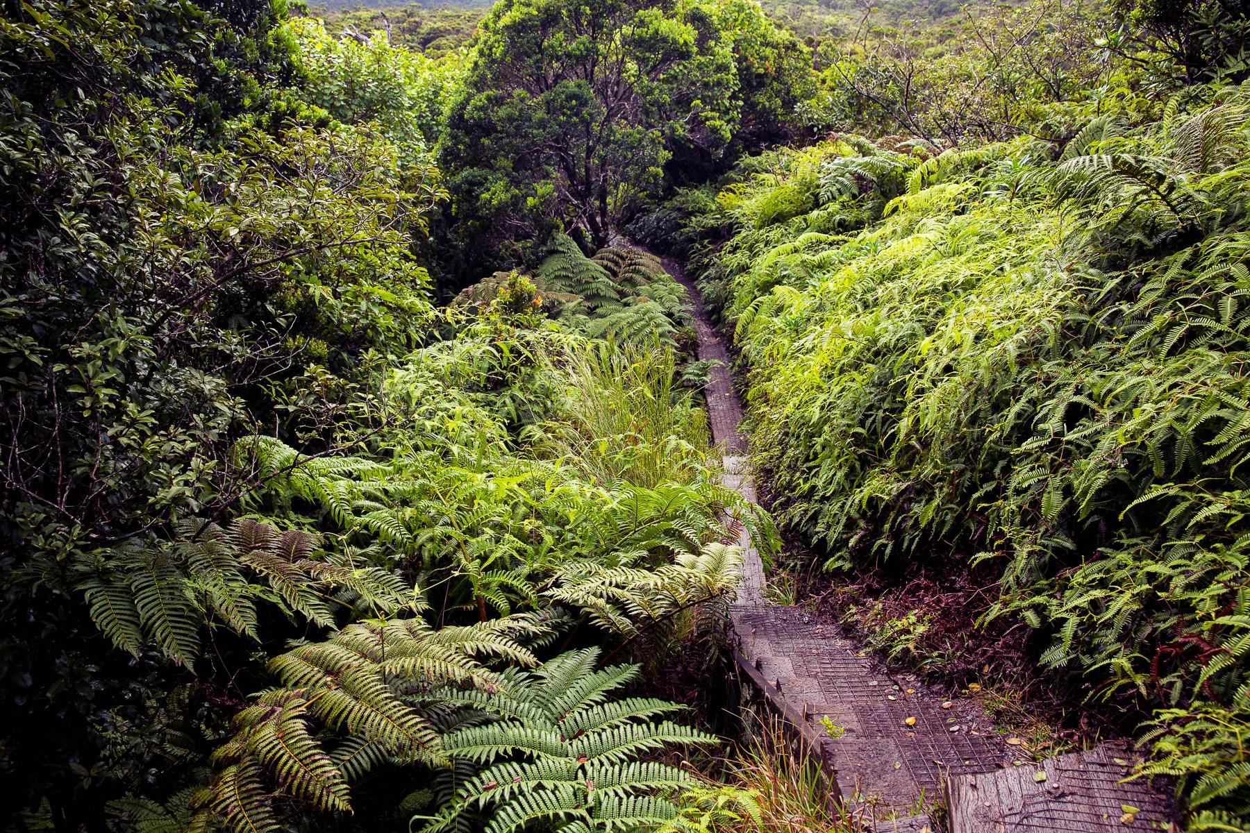 alakai-swamp-trail-hike-kauai-stairs.jpg
