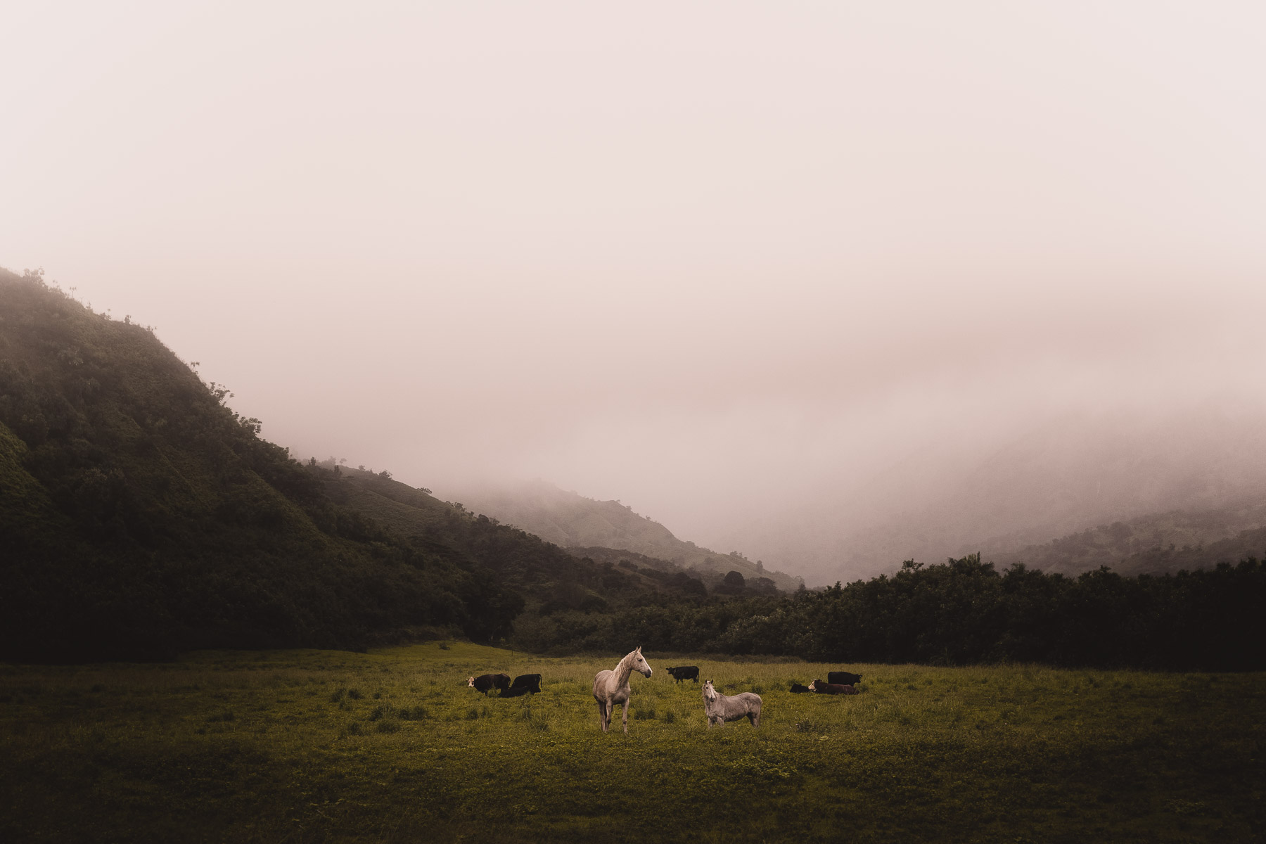 landscape-photography-kauai-wild-horses.jpg