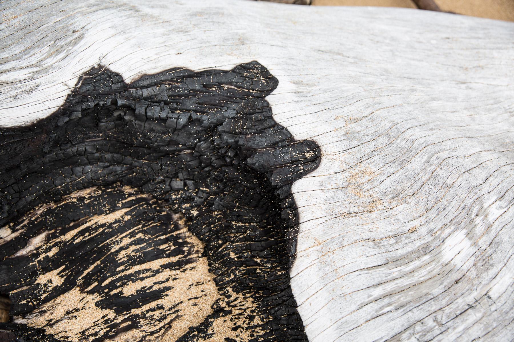 texture-macro-photography-burned-tree-beach.jpg