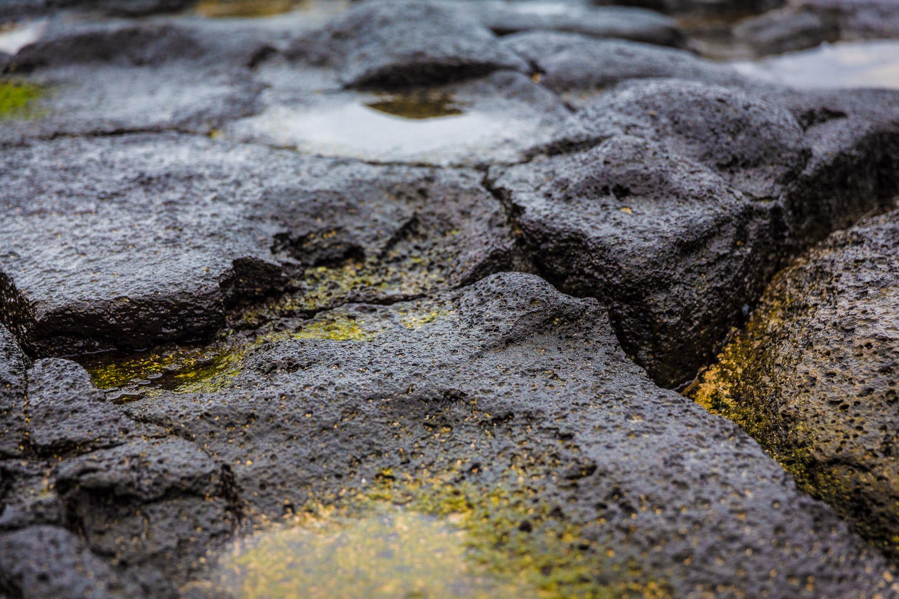 texture-macro-photography-volcanic-rocks-kapaa-beach-kauai.jpg