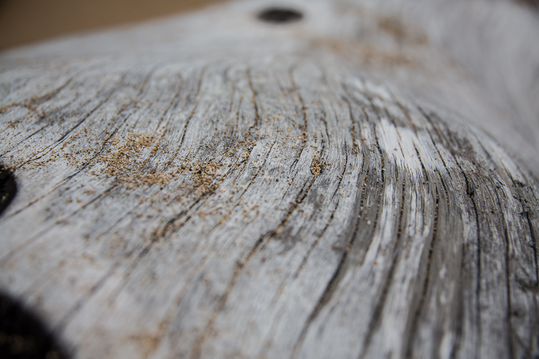 texture-macro-photography-white-tree-with-sand-detail.jpg