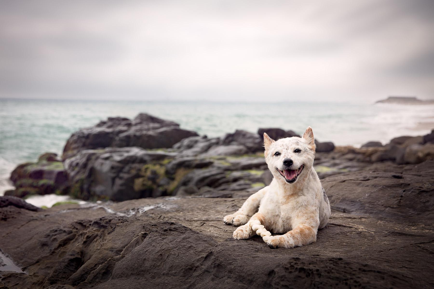 los-angeles-commercial-dog-photographer-for-pet-brands-26.jpg
