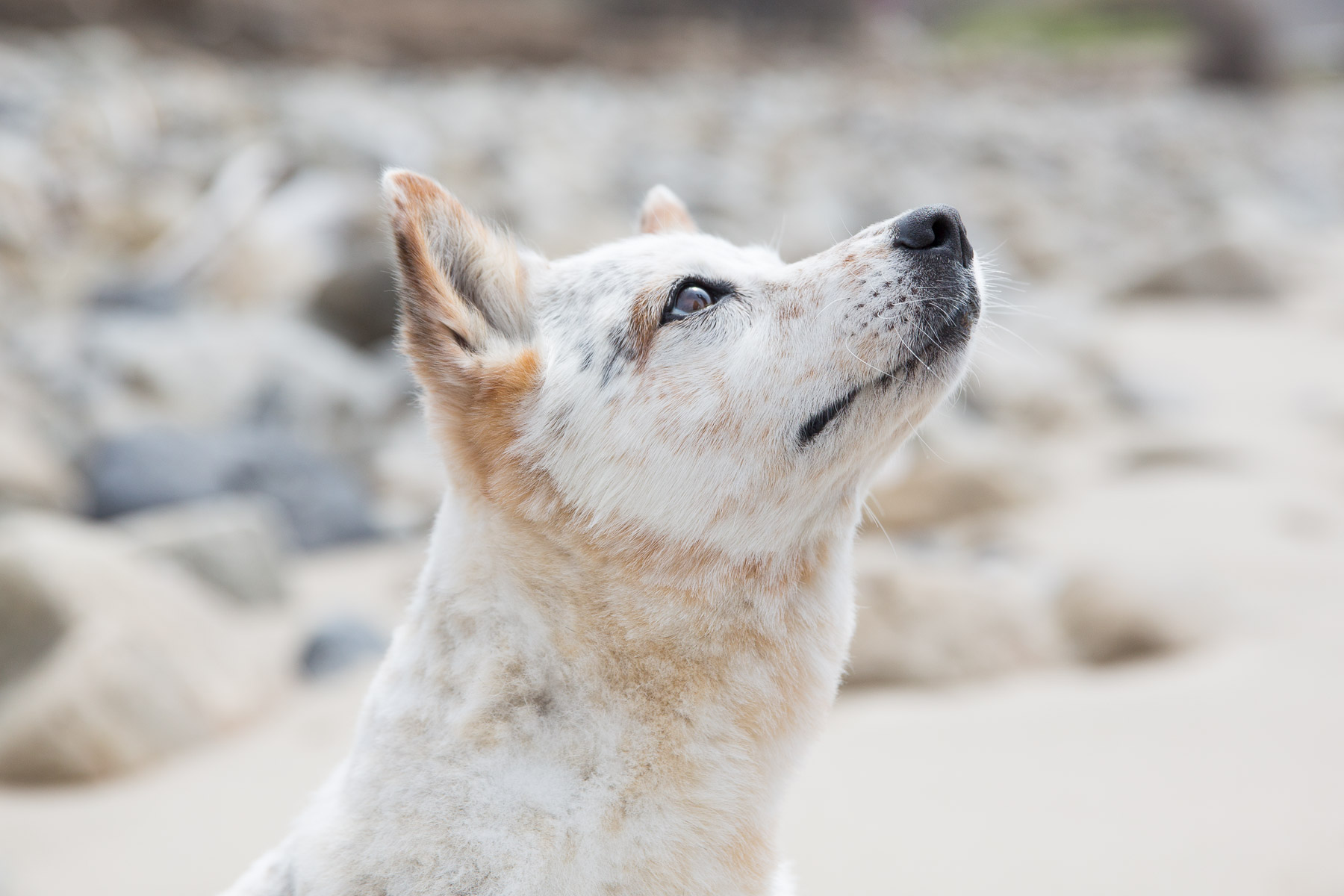 dog-photographer-los-angeles-for-hire.jpg