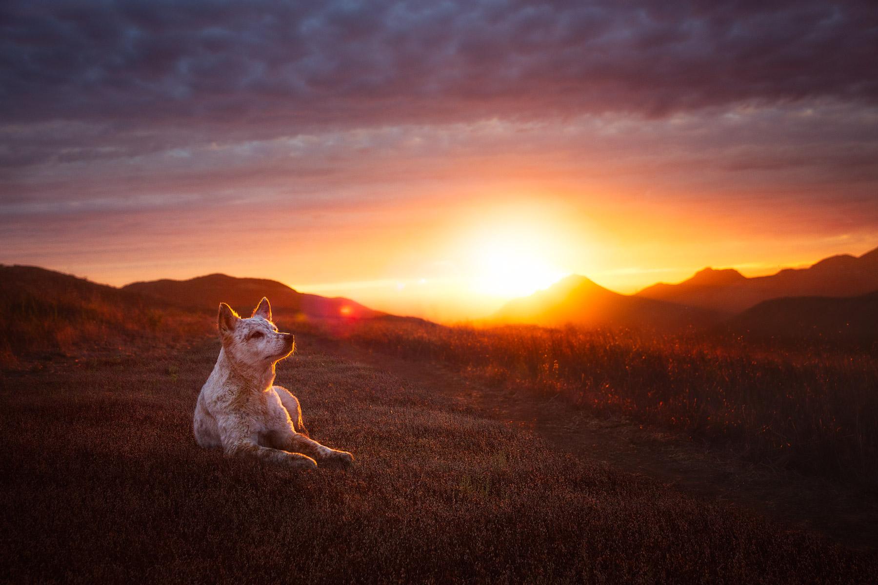 los-angeles-commercial-dog-photographer-for-pet-brands-23.jpg