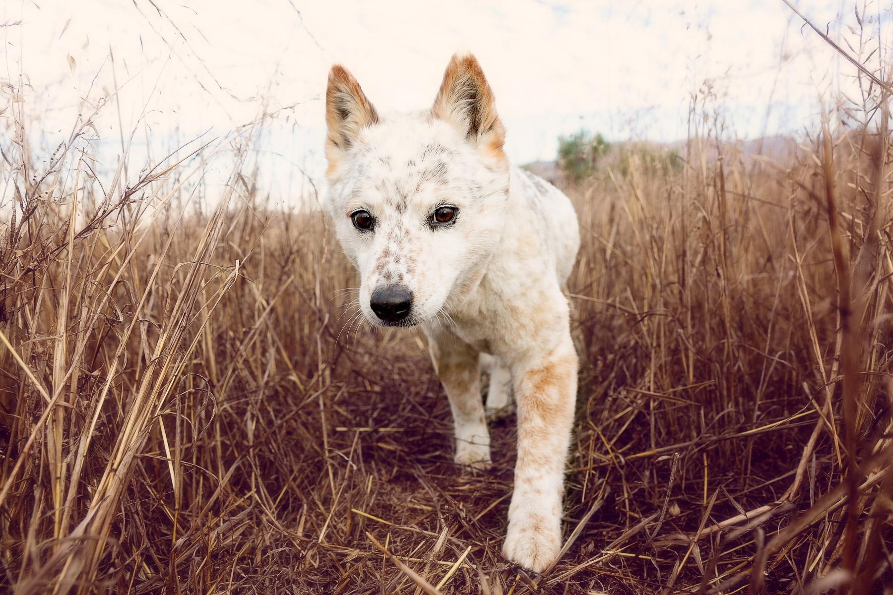 purina-animal-photographer.jpg