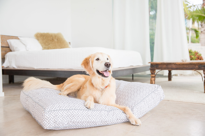 golden-retriever-jax-and-bones-dog-beds-dog-commercial.jpg
