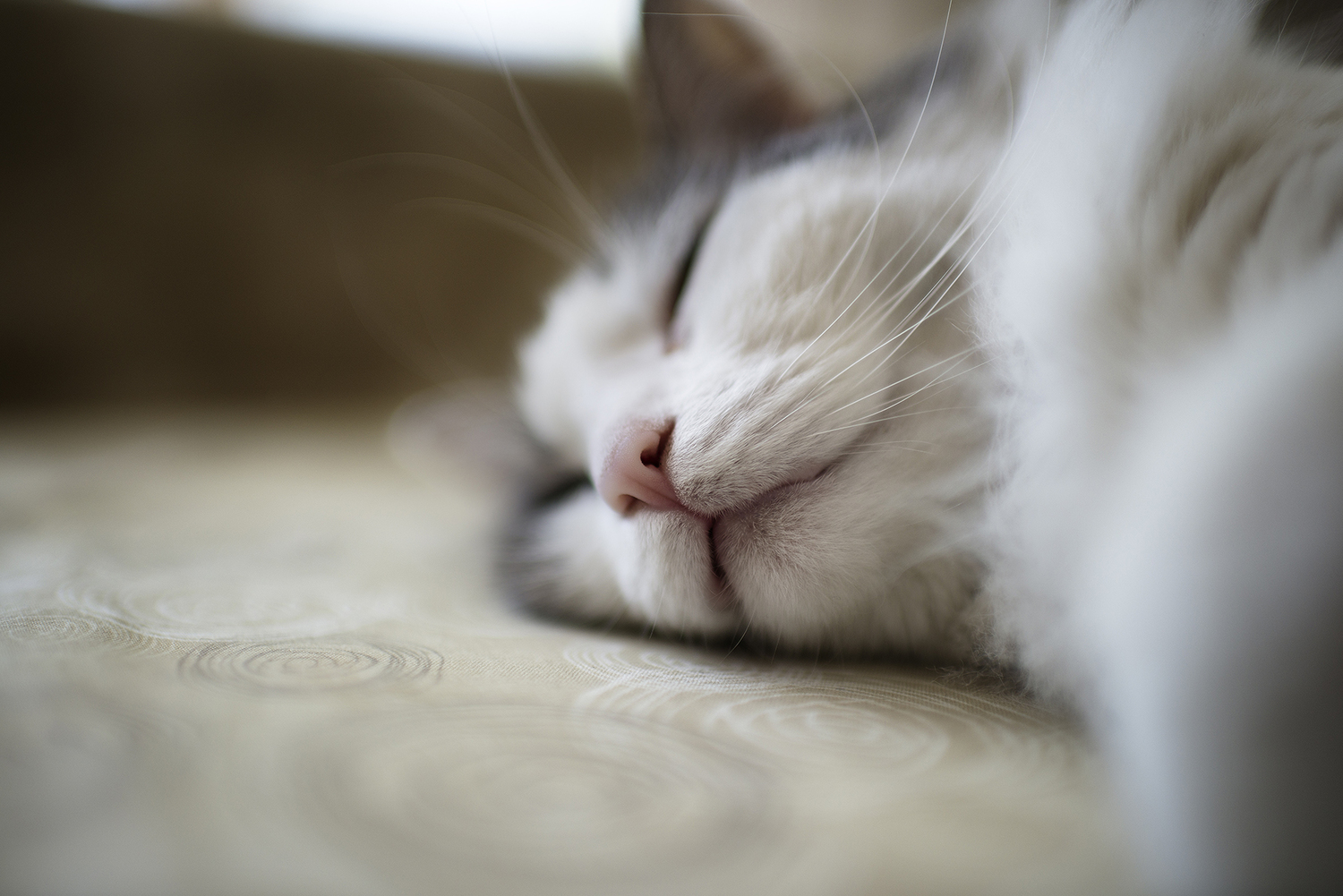 cat-sleeping-napping-on-couch-cat-photographer.jpg