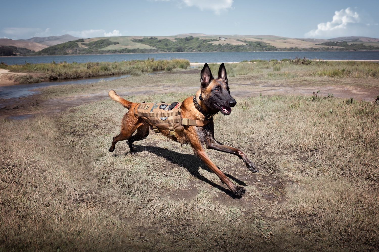 commercial-animal-photographer-dog-runs-in-field.jpg