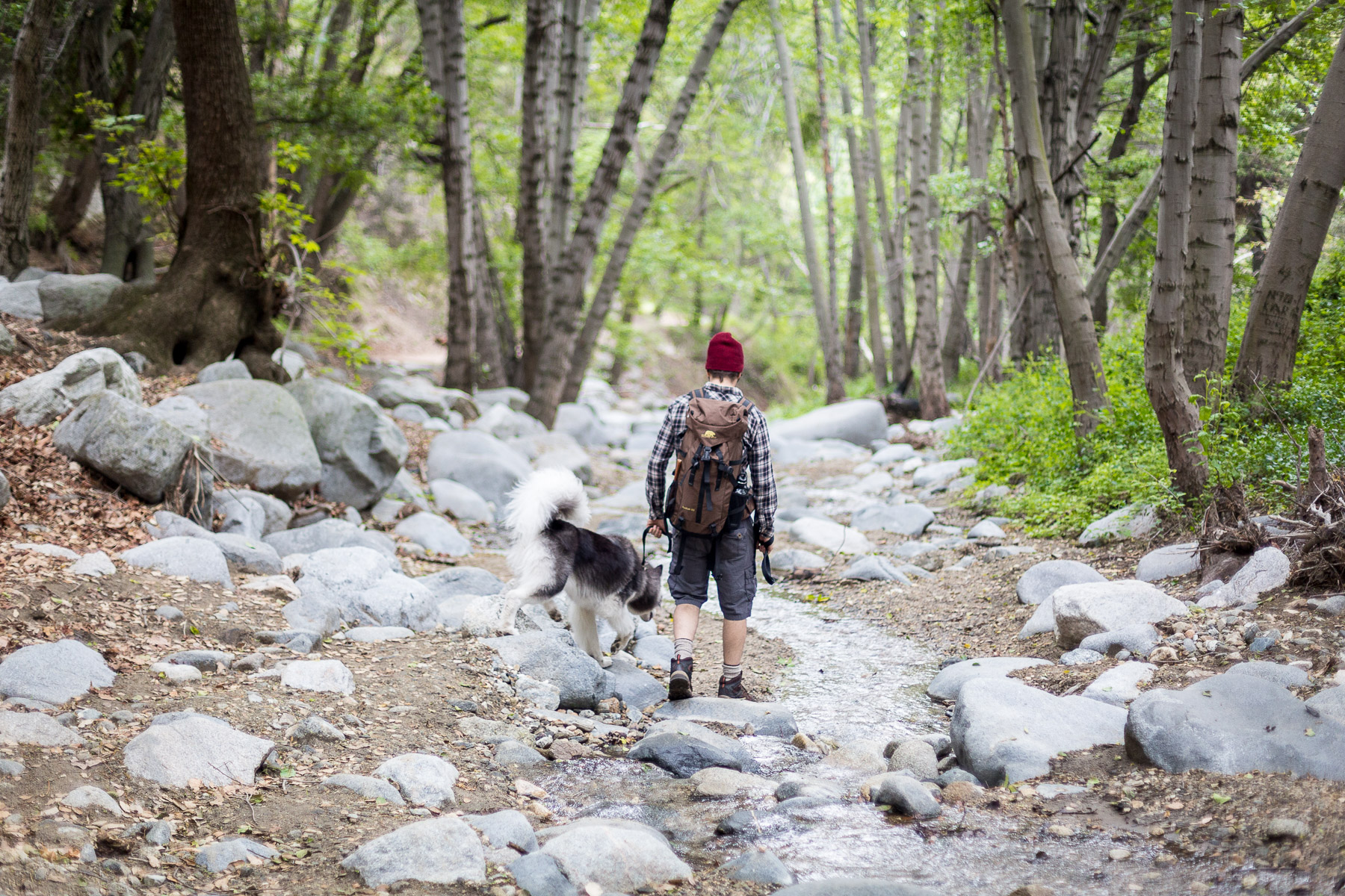 owner-and-dog-hiking-together-creek-animal-photography.jpg