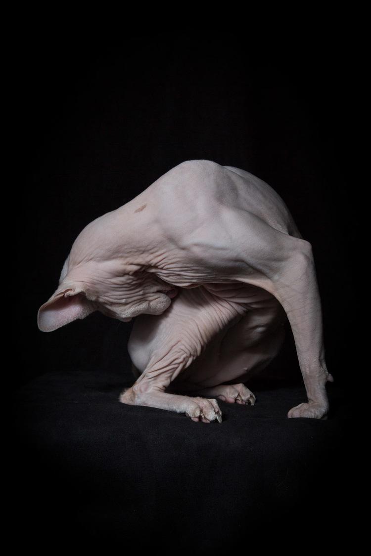 dog-cat-photographer-los-angeles.jpg