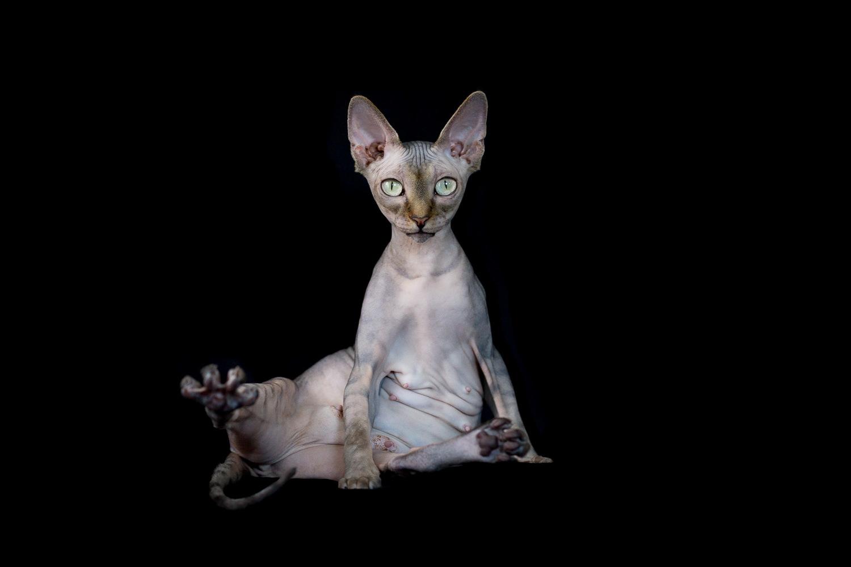 modern-cat-photography-los-angeles.jpg.jpg