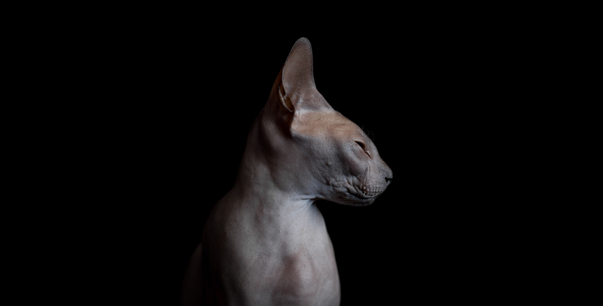 sphynx-cat-photos-by-alicia-rius-21.jpg